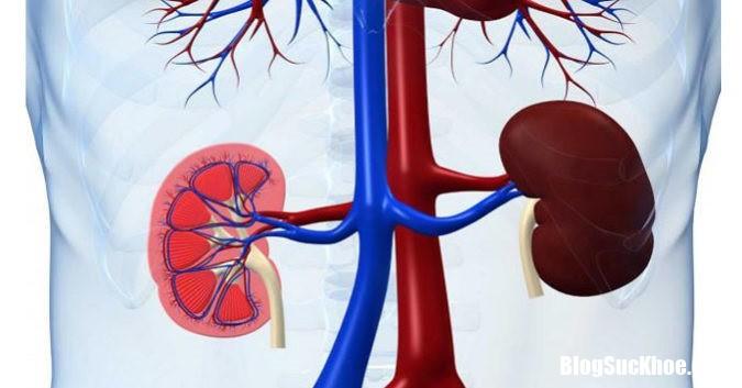 thai doc than 0842694 phunutoday Những việc làm đơn giản giúp thanh lọc hết mọi độc tố trong thận cho sức khỏe dồi dào
