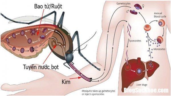 Image ExtractWord 1 Out 7288 1499050900 Cách đơn giản nhận biết sốt xuất huyết, sốt phát ban