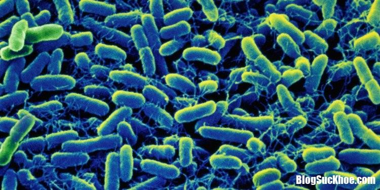 vi khuan salmonella Bệnh thương hàn   Nguyên nhân và cách chữa trị
