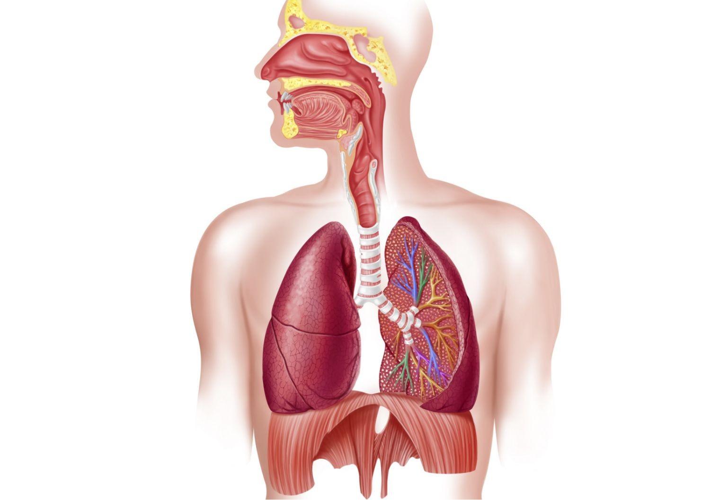 respiratory system 578d72f73df78c09e96906ff Bệnh phù phổi cấp là gì ?