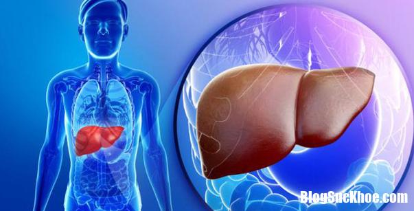 suy giam chuc nang gan nhung dau hieu nguy hiem11522742342 Những dấu hiệu nguy hiểm của bệnh suy giảm chức năng gan