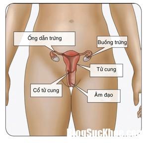 tinngan 092017 717351512 1 Câu hỏi thường gặp về căn bệnh Chlamydia khi quan hệ tình dục