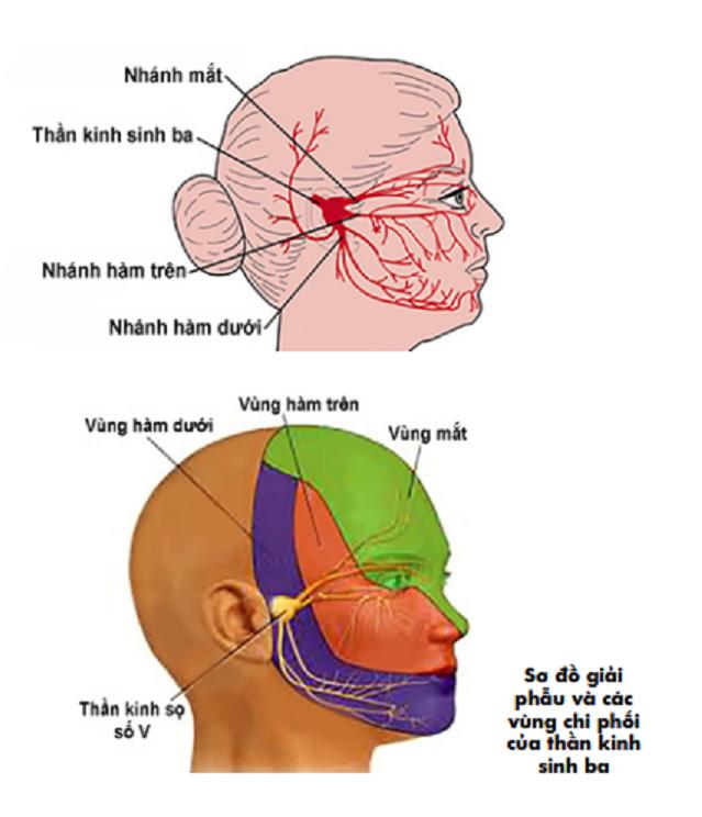 day 5 2 1559129846731909592767 Bác sĩ hướng dẫn cách xử trí nhanh khi bị đau giật mặt
